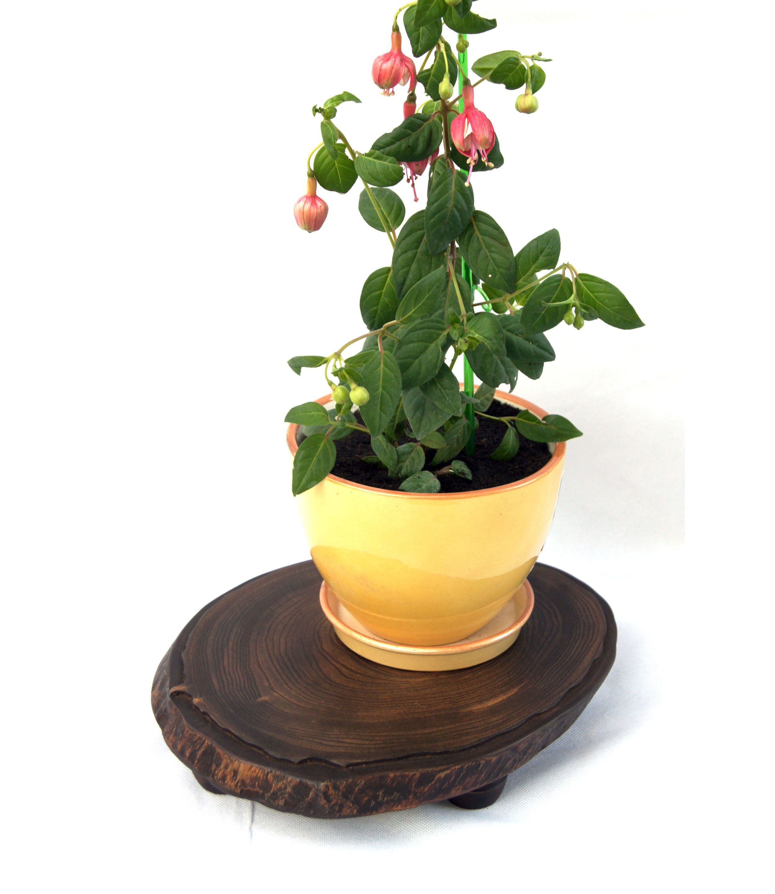 Small Live Edge Natural Wood Slab Plant Stand Indoor Rustic Wooden Planter Stand Base Flower Pot Holder Tree Stump Board Gardening Gift Wife