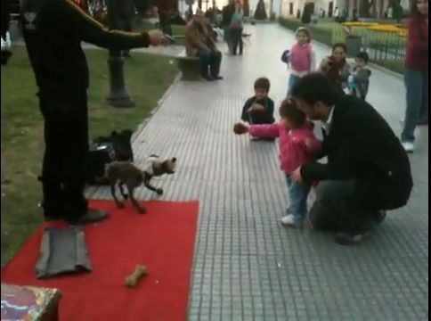 Amazing puppeteering skills by a guy in Buenos Aires! The puppet can even fetch! Wow!