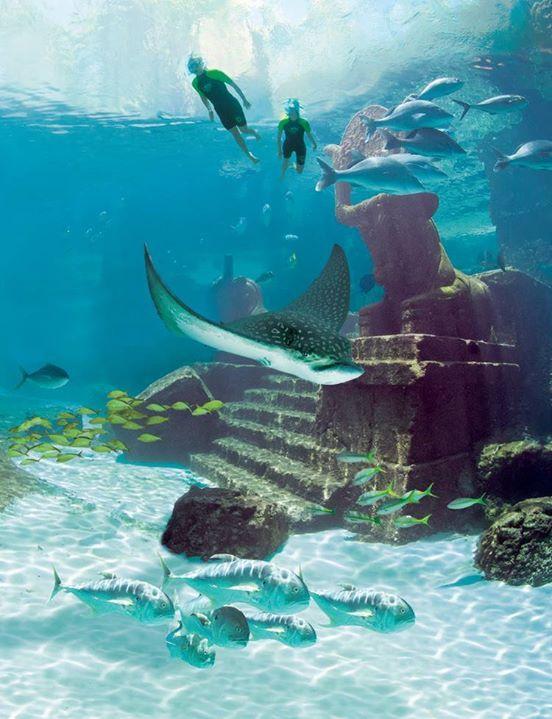 Snorkelling the ruins at Atlantis, paradise island, Bahamas ☀️️??Snorkelling the ruins at Atlantis, paradise island, Bahamas ☀️️??