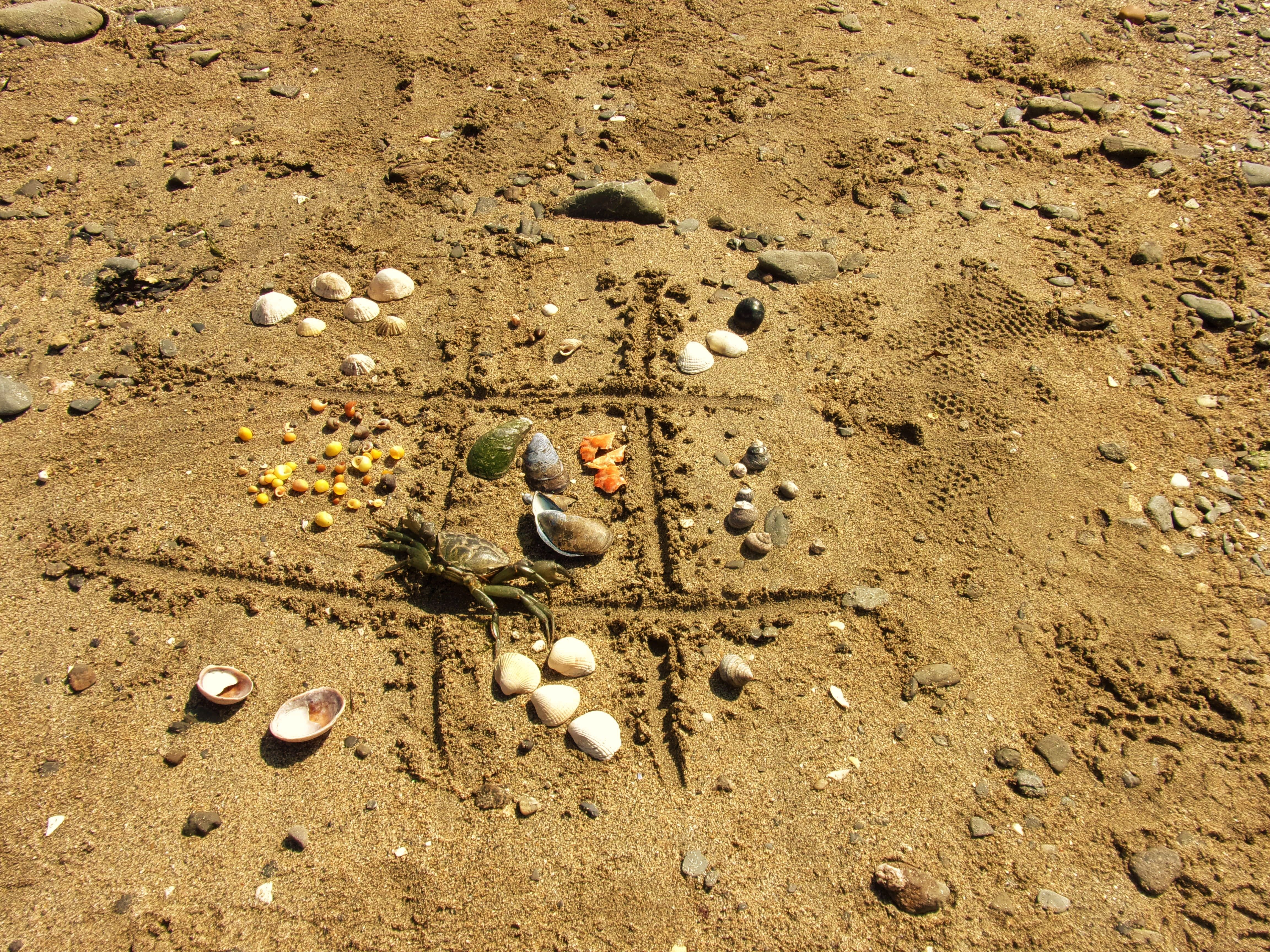 The best beach scavenger hunt. Limpets, dog whelks, periwinkles, Muscles, topshells, slipper limpets, cockles and even a shore crab's peeled shell!