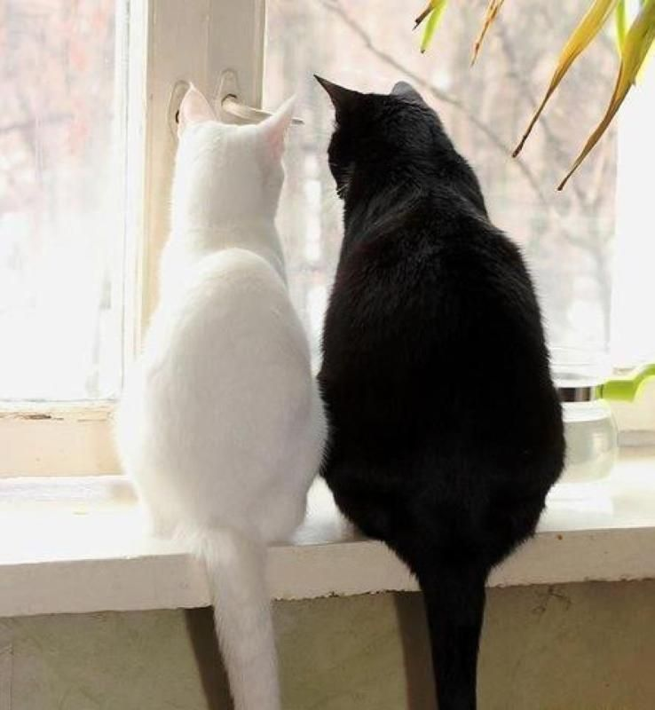 It Don T Matter If You Re Black Or White 3 White And Black Cat White Cats Crazy Cats