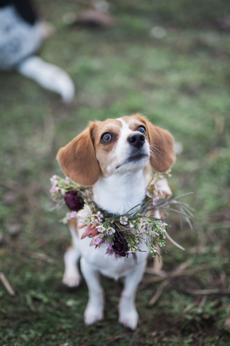 Happy Tails Nigel And Fox And Gorgeous Flowers Cute Beagles