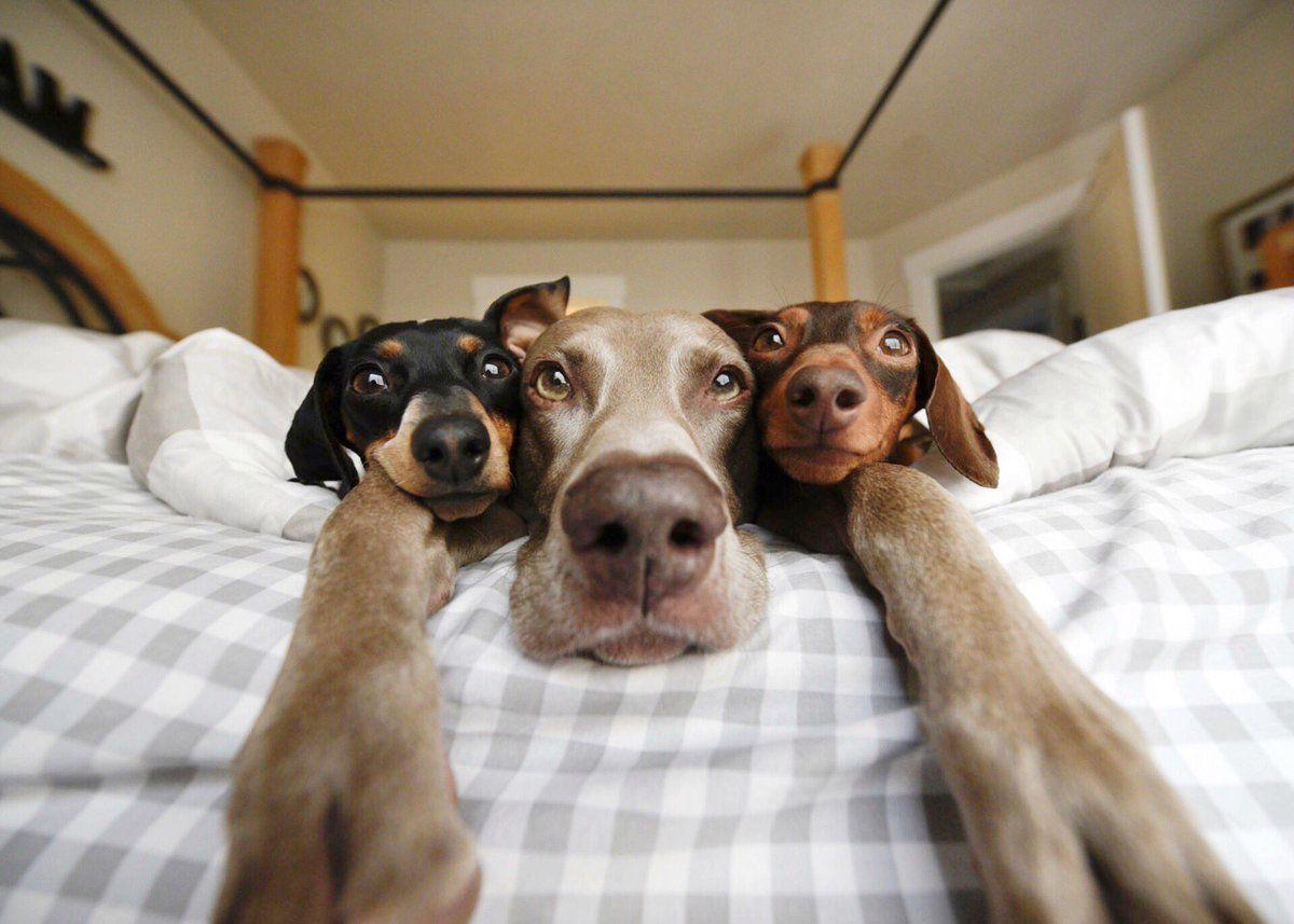 картинки смешные с собаками на русском