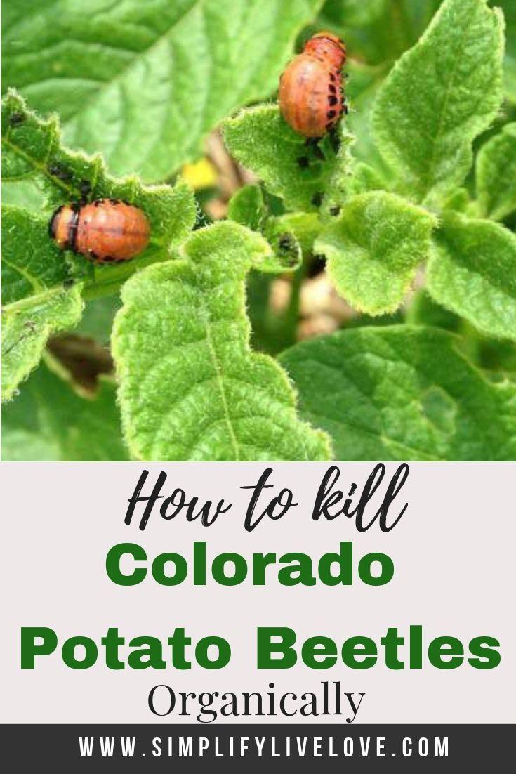 Pin on * Gardening Ideas, Tips & Tricks