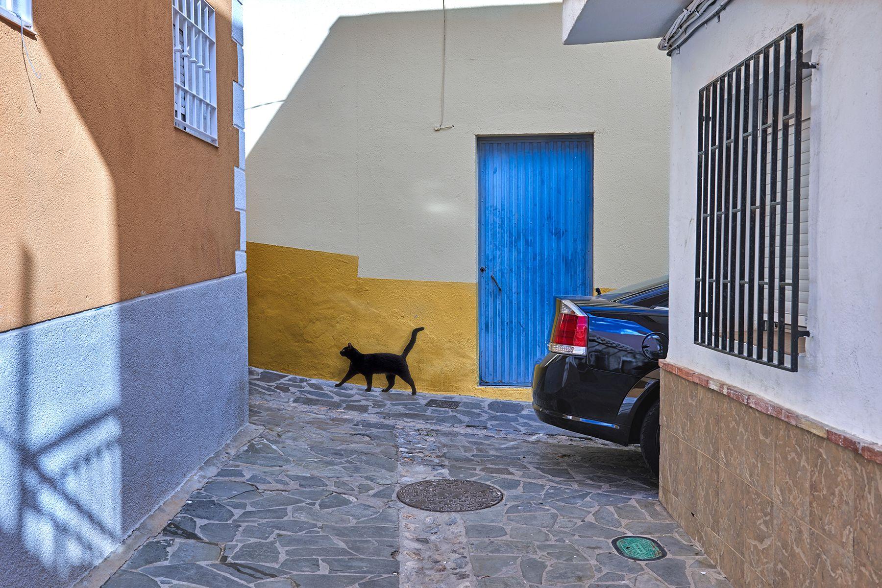 Gato negro en un callejón