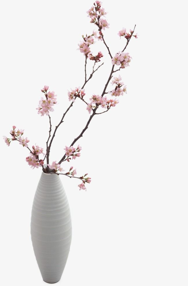 Vase White Plum Flower Png Transparent Clipart Image And Psd File For Free Download Plum Flowers Vase Clipart Images