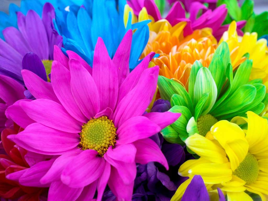 Google Image Result For Http Flowers Org Wp Content