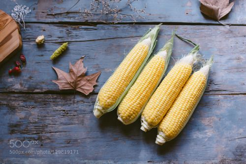 Corn by milosljubicic  IFTTT 500px yellow agriculture background cereal cob corn cornmeal crop delicious fall farm food f