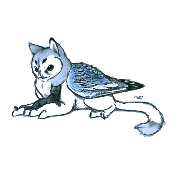 Owl Griffin It Is Adorable Creature Drawings Animal Drawings