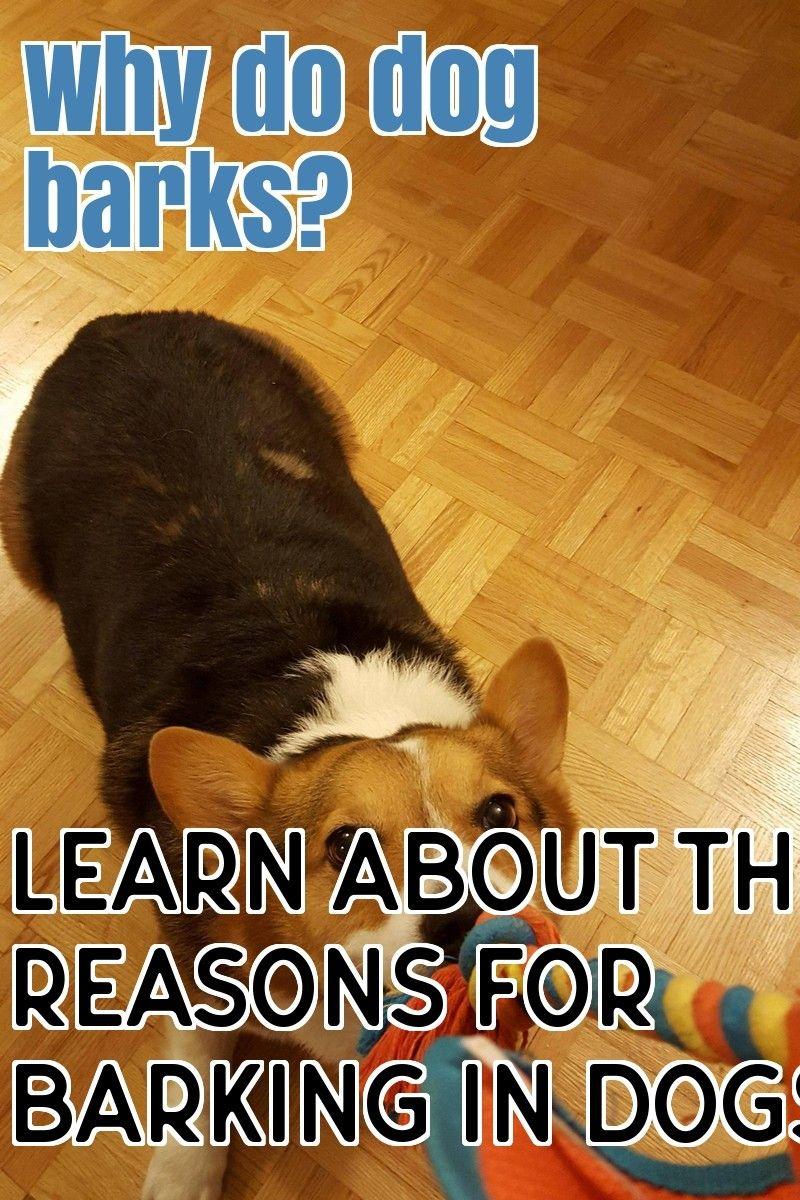 Why Dogs Barking Dog Barking Basic Dog Training Dogs