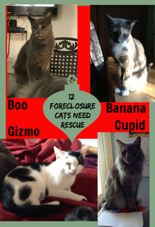 Willingboro Nj Urgent 12 Cats Need Rehoming Due To Foreclosure Deadline Is 12 15 Please Rescue Adopt O Frontline Plus For Cats Cats Siberian Cats For Sale