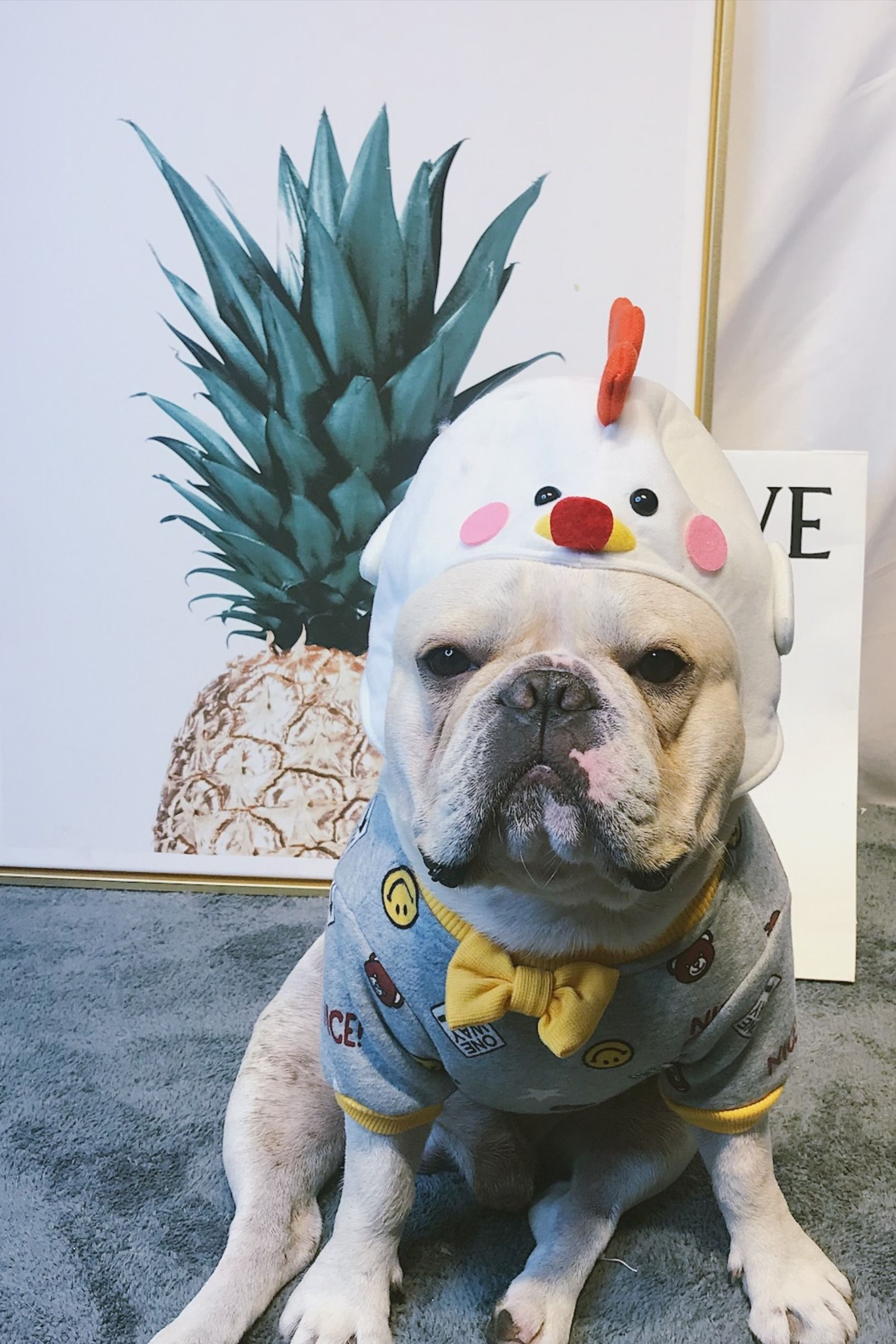 funny creative dog headwear hairband headwrap for medium ...