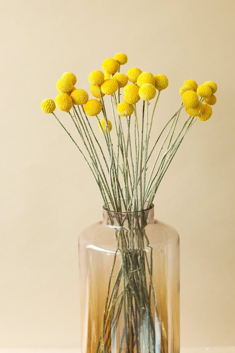 Pack Of 25 Dried Billy Button Craspedia In Yellow In 2020 Billy Buttons Dried Flowers Silk Flowers Wedding