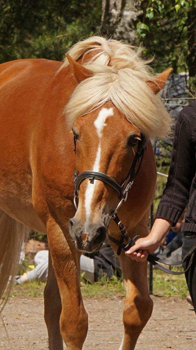 Pin by Isaac Brushett on Model horse reference Horses