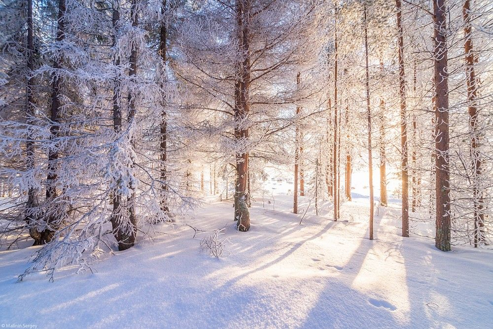 Пейзажи зимнего леса фото