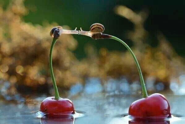 Snail kiss on a cherry