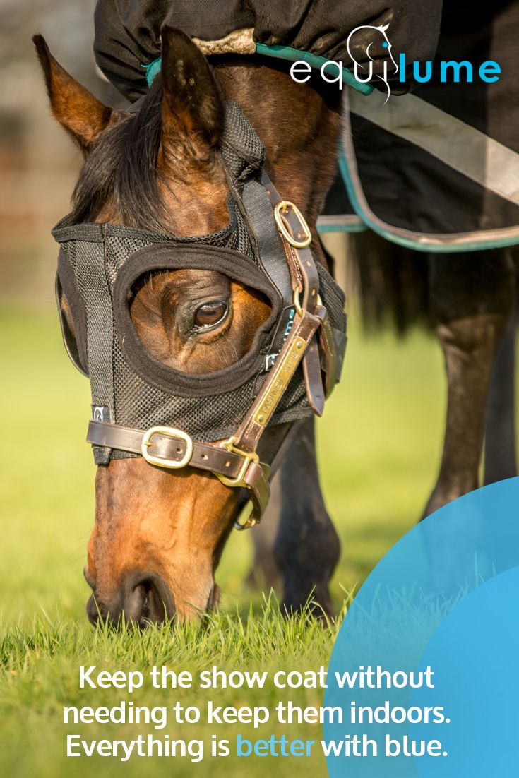 Learn How Equilume Can Help Sustain A Gorgeous Show Coat Without The Need To Keep Them Indoors This Innovation Allow Horse Grooming Horses Freedom Of Movement