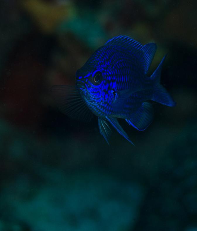 ภเгคк ค๓๏  unterwasser tiere