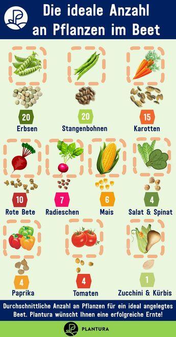 Hochbeet bepflanzen: Pflanzplan, Mischkultur & Gründüngung #beetanlegen