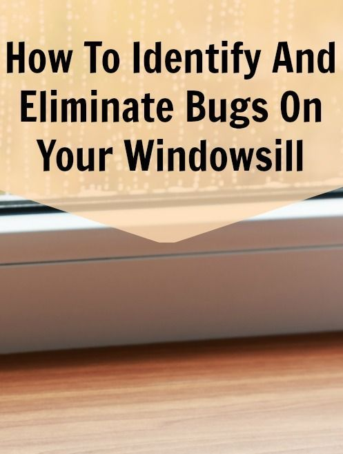 How To Get Rid Of Bugs On The Windowsill  This Summer I Have Been Alluring Small Brown Bugs In Bathroom Decorating Inspiration