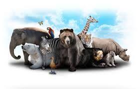 Afbeeldingsresultaat voor dieren