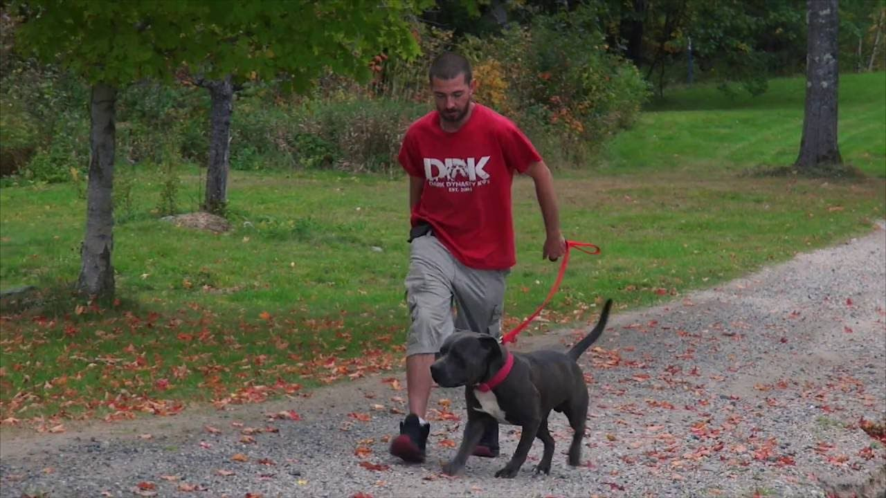 Dog Training Tips Pop Not Pull How To Correct On Leash Dogs