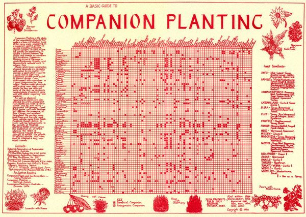 Companion Planting Chart  Companion Planting  Chart Rolled In Tube