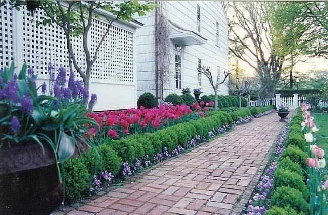 Tulips Boxwood And Pansies House Landscape Boxwood 640 x 480