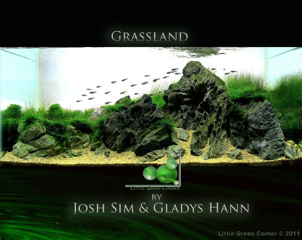 Aquascape by Josh Sim -> Grassland . Pin by Aqua Poolkoh