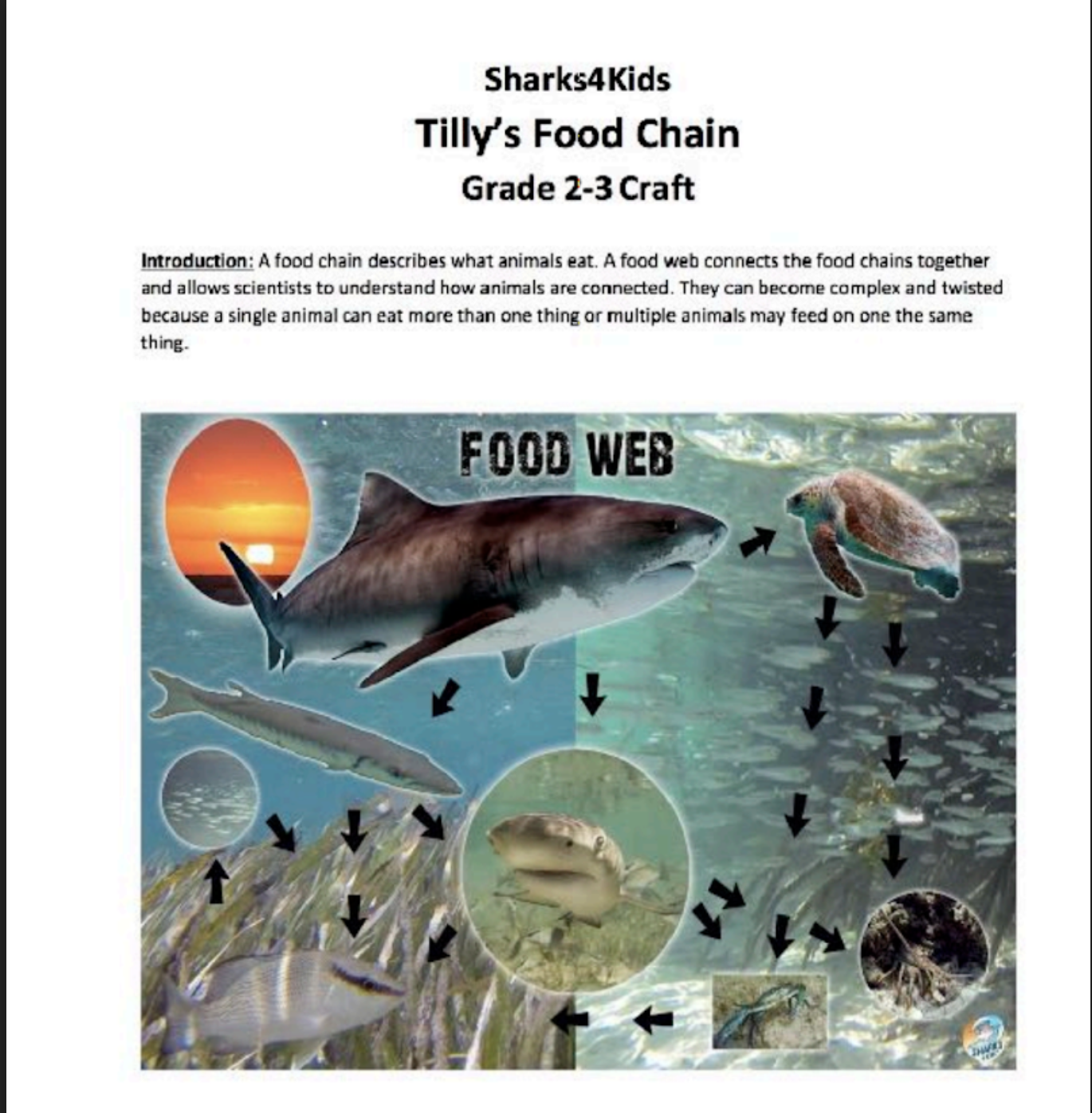 Dive Into The World Of Ocean Food Chains And Webs With