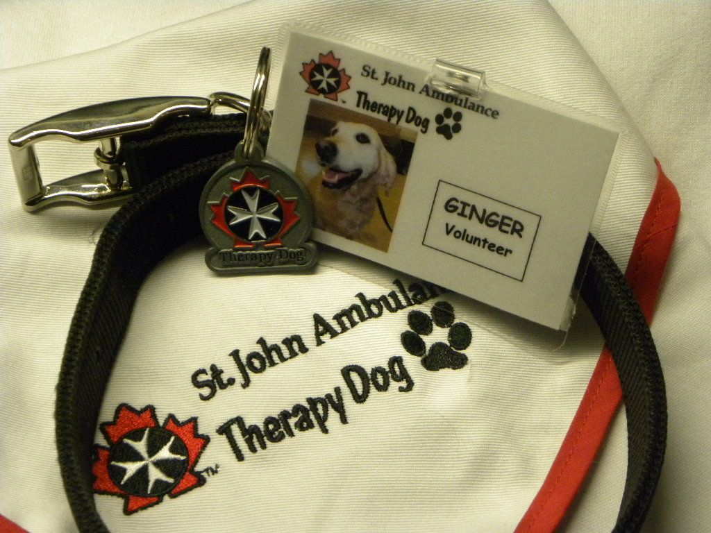 My gingers uniform as a certified sthn ambulance therapy dog my gingers uniform as a certified sthn ambulance therapy dog in kitchener xflitez Images