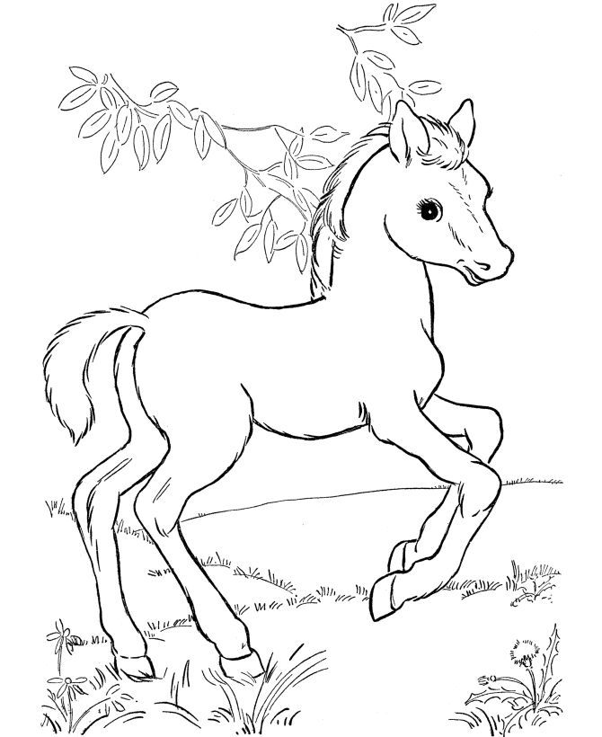 horse pictures to color horse coloring page young foals play in the pasture