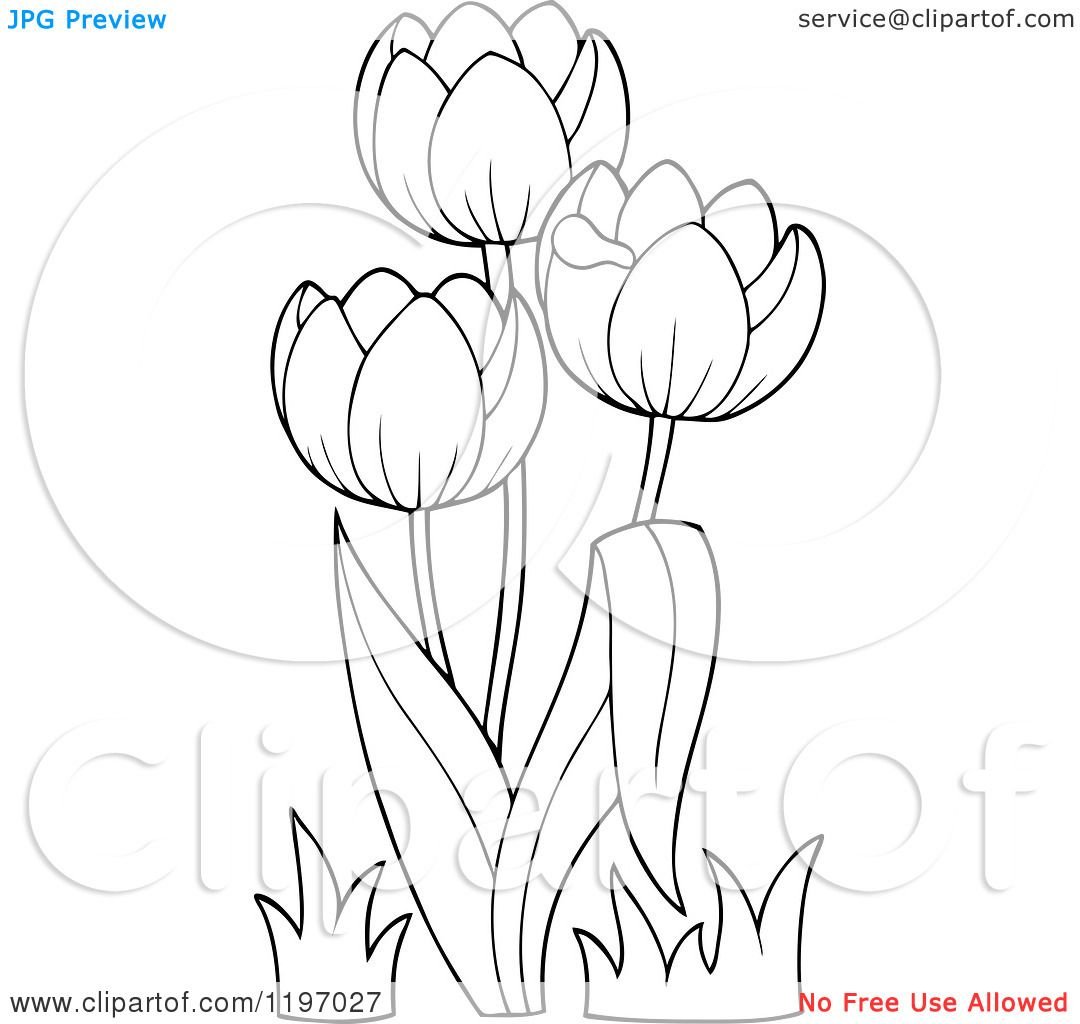 Tulip Flower Outline Clip Art Sketch Template Flower Outline Tulips Flowers Tulip Drawing