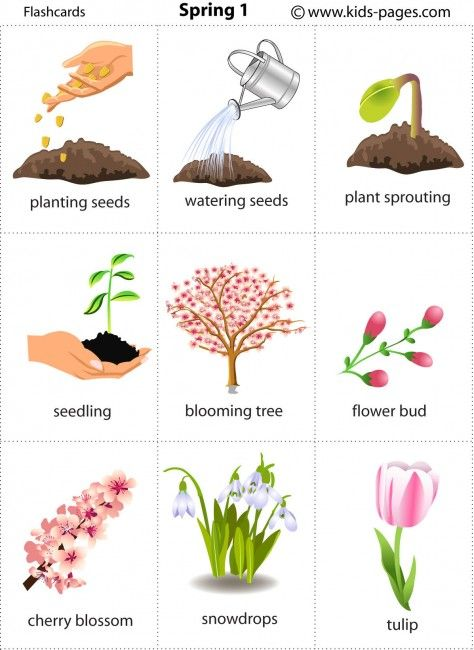 Chinese Calendar Tools : Free printable spring flashcards seasons les saisons