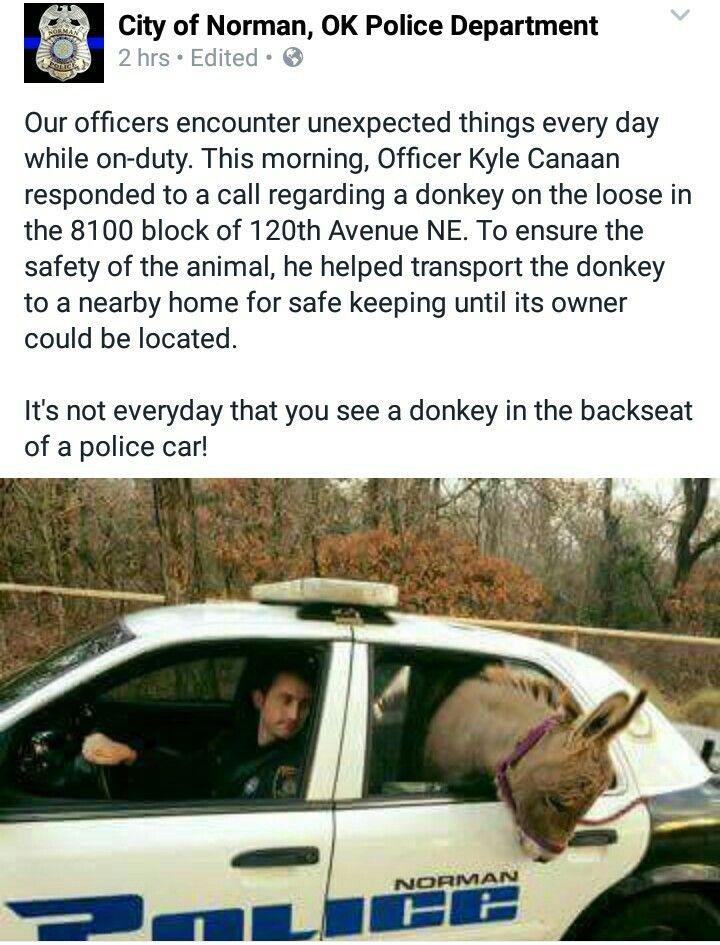 Norman ok police department my job law enforcement