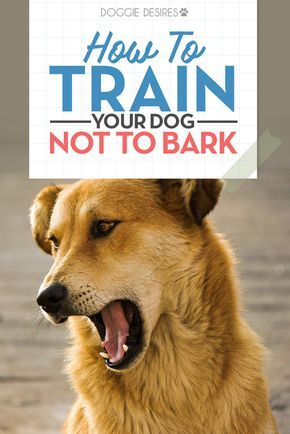 How To Train Your Dog Not To Bark Training Your Puppy Training