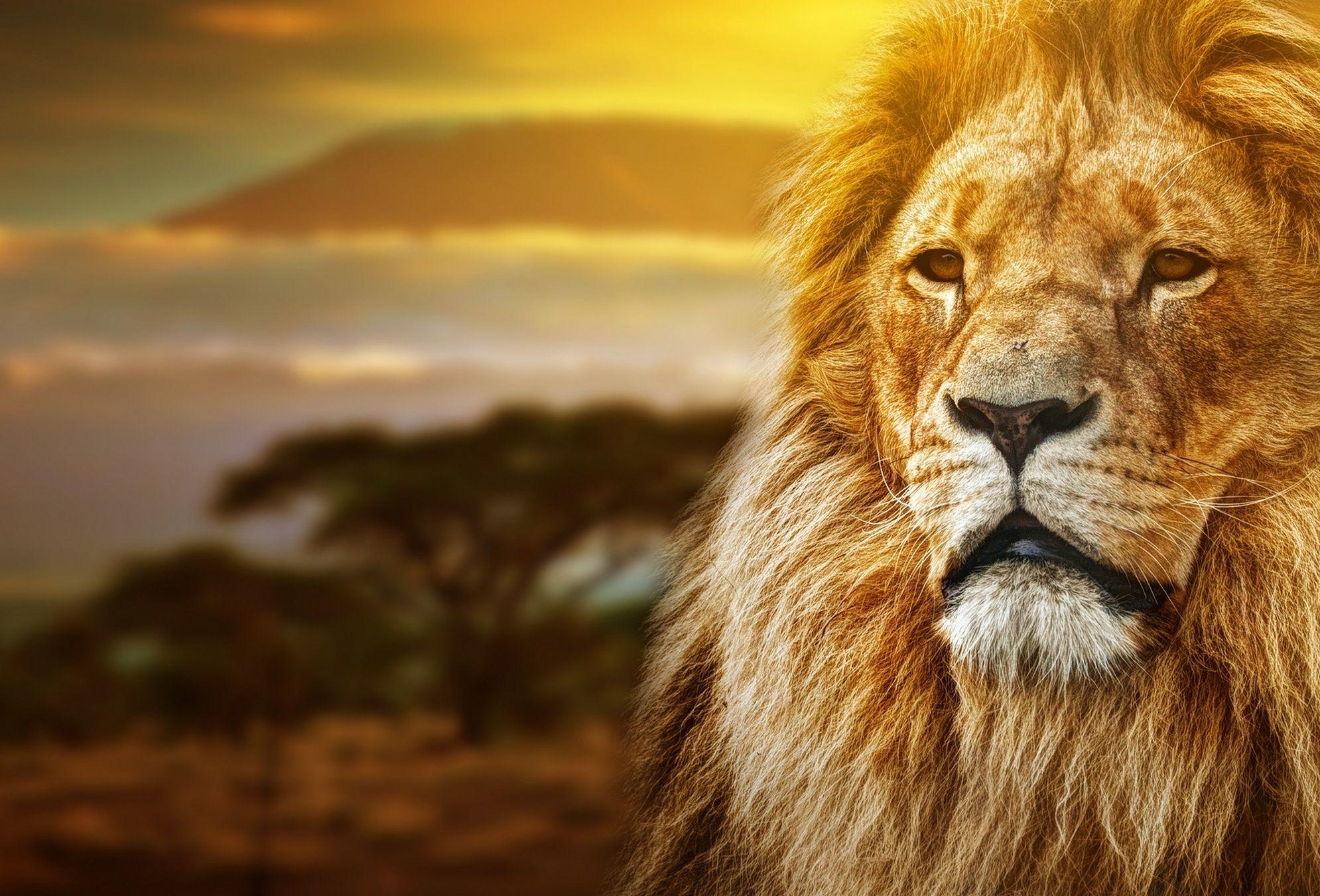 найдите льва на картинке почти всё время