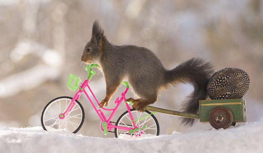 Wild Squirrels Celebrate Easter Squirrel, Images of