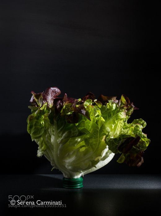 Pic: Red oak leaf lettuce with bottle cup