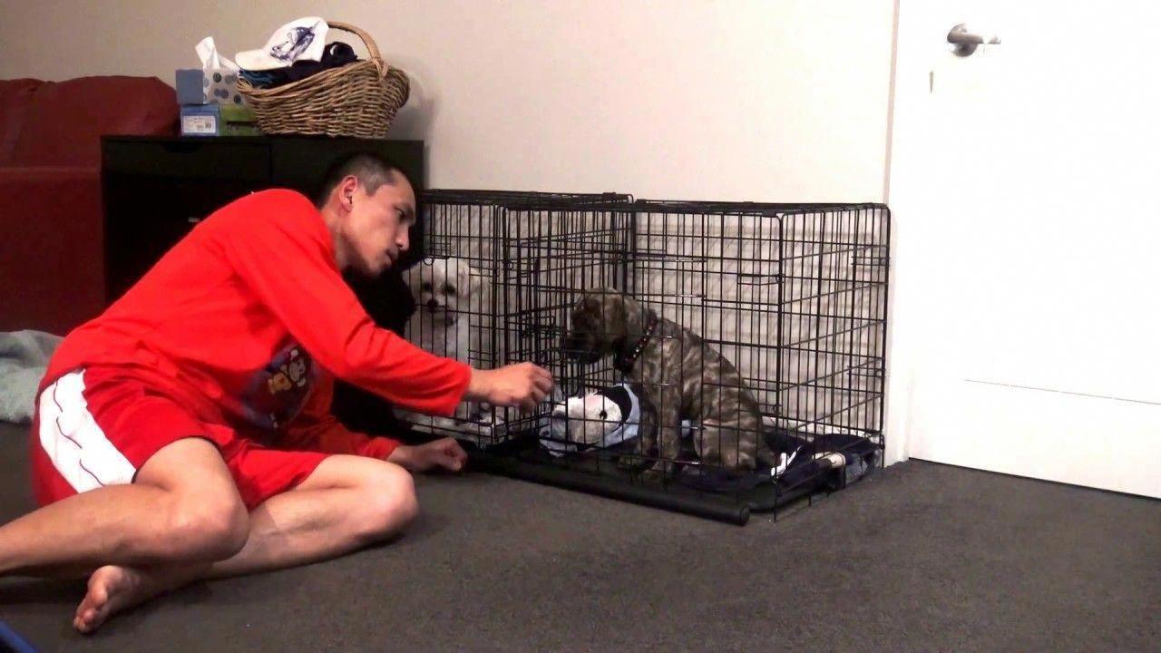 Dog training for dummies dogtrainingfordummies