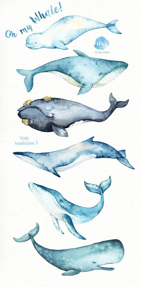 Oh My Whale! Watercolor Clip Arts,Whale clipart, Marine mammals clip art, Killer whale clipart, Whales illustration, Blue whale illustration #colorpalettecopies