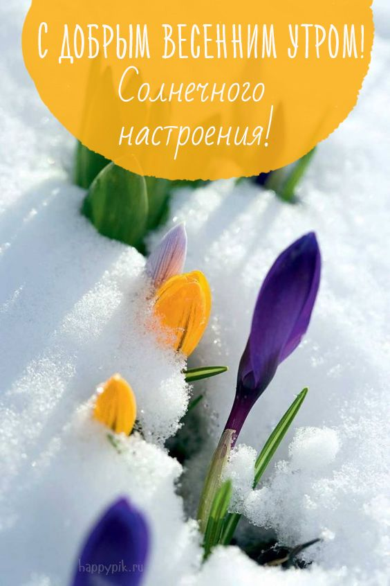Dobrogo Utra S Izobrazheniyami Illyustracii Solnechnaya