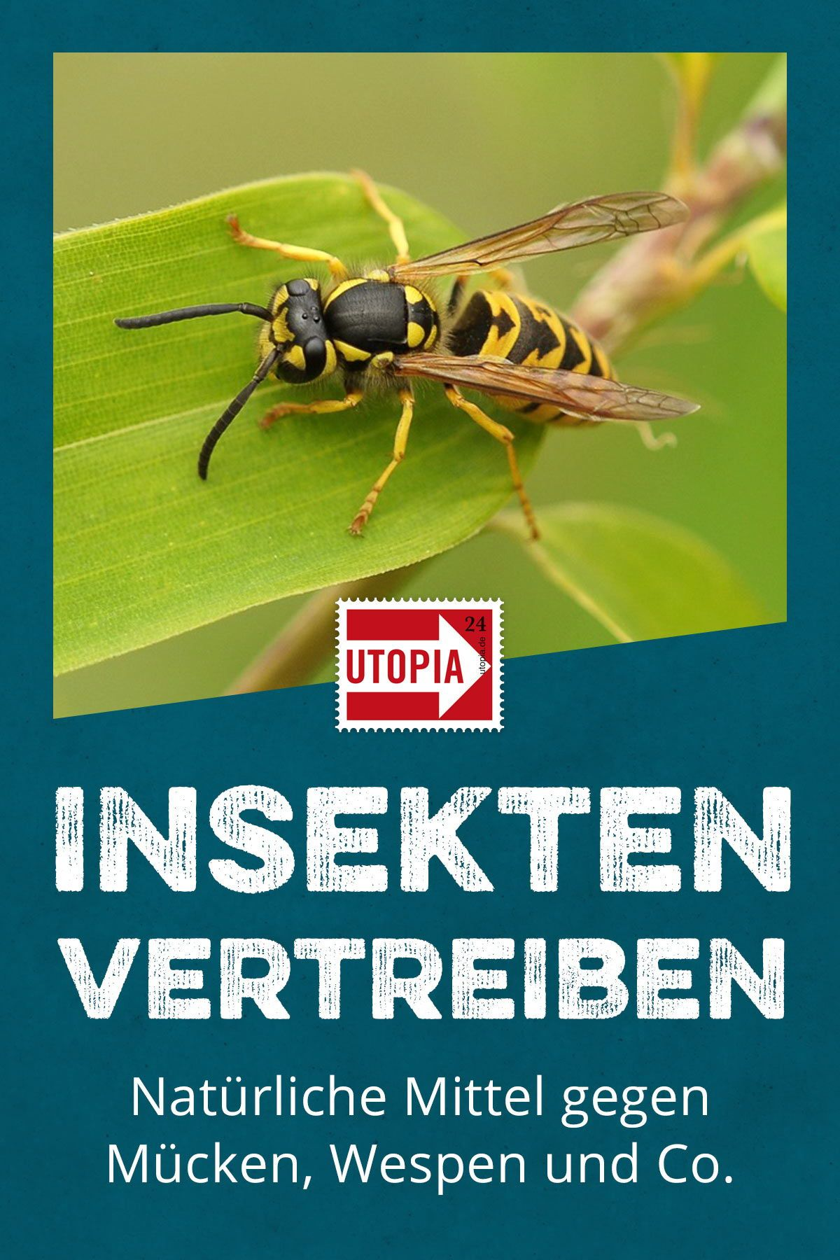Geliebte Insekten vertreiben: natürliche Hausmittel gegen Mücken, Wespen &ZH_42