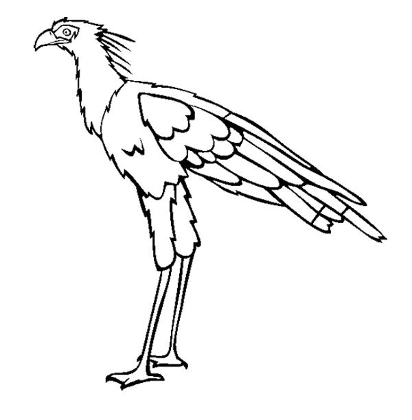 90 Top Secretary Bird Coloring Pages For Free