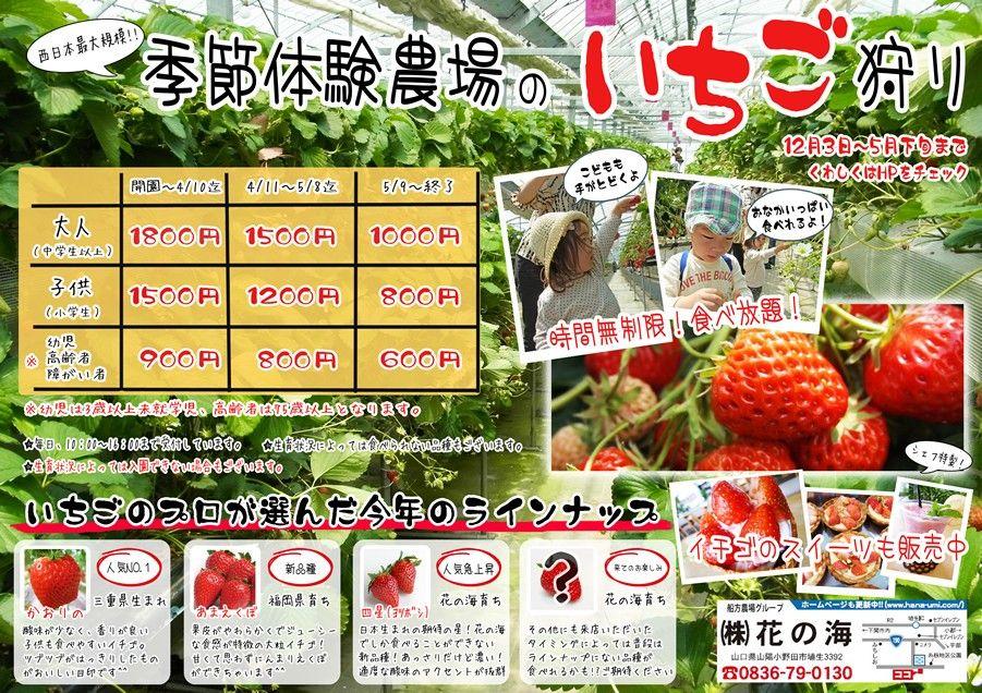 西日本最大級のシステム農場 花の海 の公式ホームページです いちご狩り ブルーベリー狩り 収穫体験などに是非お越し下さい いちご 収穫 ブルーベリー