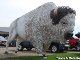 a large white buffalo stands guard over the prostrollo car lot it s just down the road from the giant pheasant white buffalo large white huron pinterest