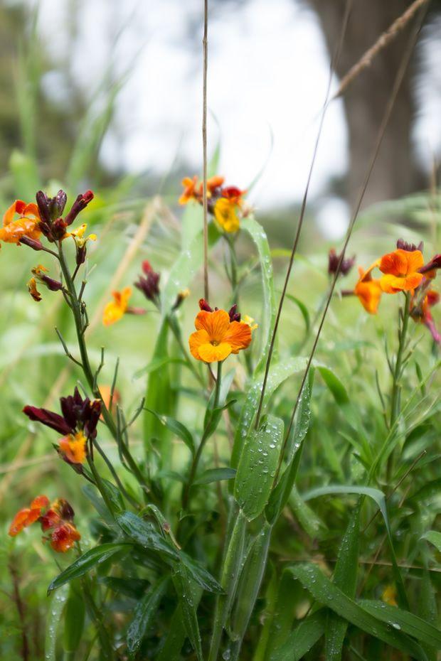 girofl e semer planter entretenir jaime jardiner planter des fleurs jardins et belle. Black Bedroom Furniture Sets. Home Design Ideas