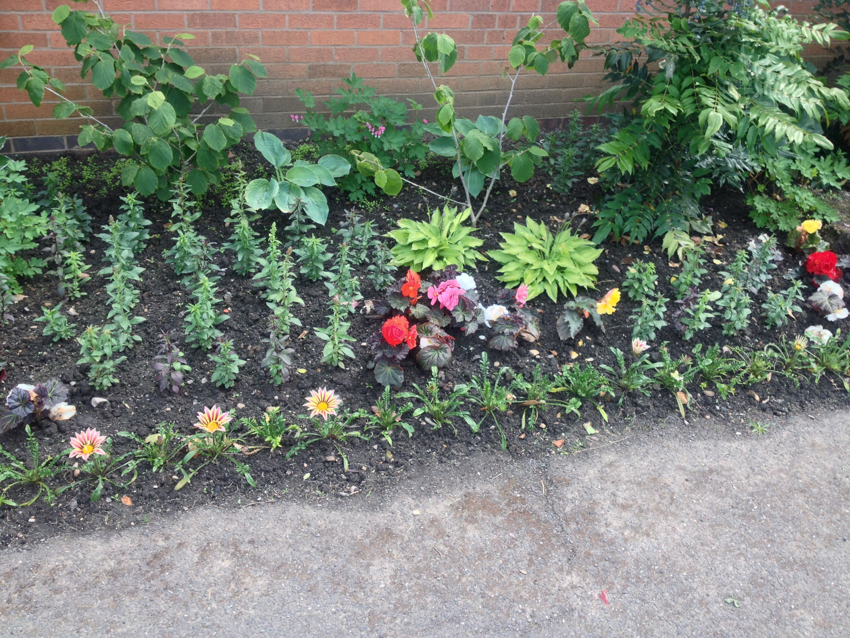 Flower bed outside the main office