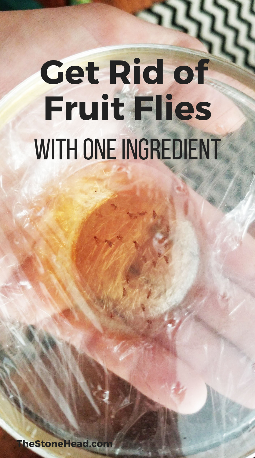 The infestation how to get rid of fruit flies naturally for the