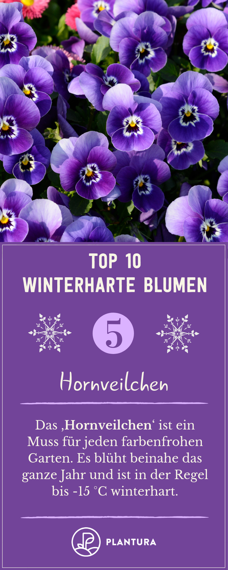 50 Perennials Winterharte Blumen Diese Robusten Sorten Trotzen Dem Winter Top 10 Winterhart Winter Flowers Garden Winter Flowers Beautiful Flowers Garden